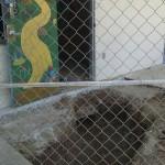 disturbed soil 2013 MHS